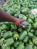 GREEN CAPSICUM, first harvest for sale