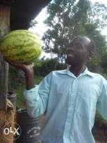 Sweet melons for sell
