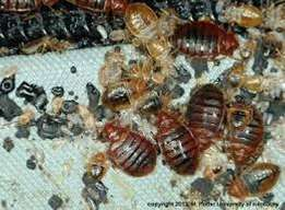 Proffessional Bed Bugs Treatment