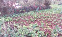 1/8 of an Acre. Ngong near Traffic police training School