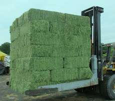 Lucerne small square hay bales