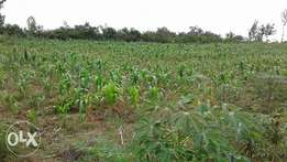 50acre agricultural land on sale in Kanyamwa,mirogi.Homa-bay county.