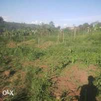 Land For Sale. 1.8acre in total