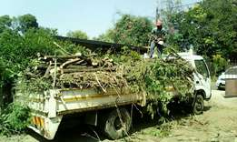 A-Z Tree felling and once off clean ups.