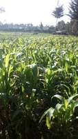 2 Acres of land on Sale at Mwenda-andu Nyandarua county
