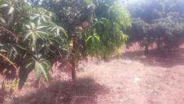 Land on sale - 5 acres along Yatta canal