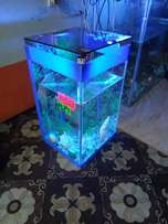 beautiful complete aquariums