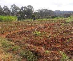 Kitisuru 1/2 acre plot for sale Kitisuru - image 1