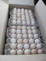 Fresh fertilized broiler chicken eggs and lohmann eggs for sale