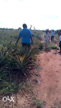 Malindi shamba for pineapple growing for sale at ksh 20,000 per acre. Kamale - image 1
