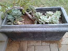 Potted plants and garden items