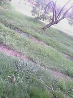 A prime 100 by 100 redevelopment plot in Wangige with clean title
