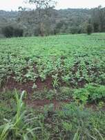 40*80 plots at Kenol town. Approx 2.5 kms off tarmac(Nai-Nyeri hghway)