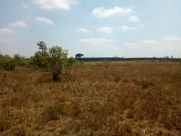 Gatundu Rd 50 x 100 plot.