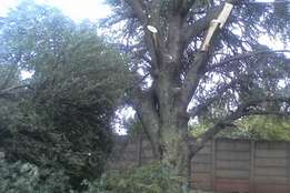 Tree felling , stump removal , site clearance , pruning , trimming