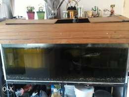 6 foot tank with fish for sale
