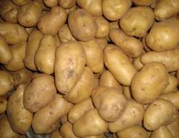 2016 New Crop Potato Hot Sale