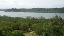 Shanzu majaoni mtwapa.. slightly bigger than a half acre.. creek view