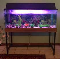 Fish Tank (4ft) with Accessories