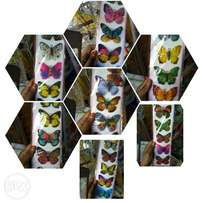 Butterfly wall decorating stickers