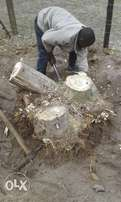 Knowle Tree Services- Stumps removal in Port Elizabeth