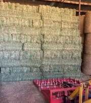 Lucerne small square hay bales suit horse livestock