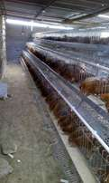 Poultry chicken cages at a subsidized prices