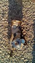 Water pump for 2010 Opel corsa essential for sale