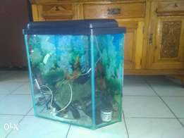 Fish tank, with 2pumps,2 air pumps and all accessories for sale