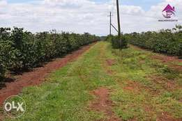 3/4 acre land to lease in parklands