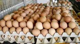 Poultry eggs for sale