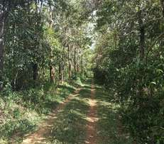 Exclusive residential plots for sale in Kakamega Municipality