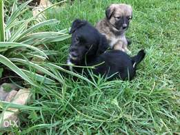 Little house puppies