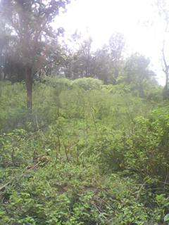 Sale of aquarter piece of land at MUGOYA 200m from the station Embu Town - image 5