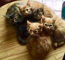 8 Week Old Kittens seek a loving and caring home