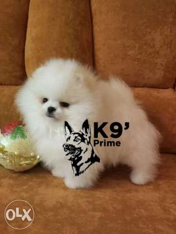 Mini Pom 350g full white imported from Ukraine