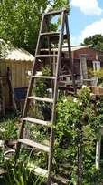 Large Wooden Ladder J 947