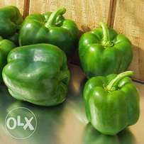 Pilipili Hoho Giant Green Capsicum