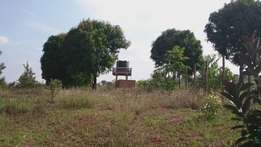 Fertile land.. Fenced with borehole 1.7 kms from Equatorial Nut processers