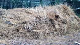 Thatch Grass for FREE