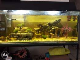 4 foot tank with fish for sale