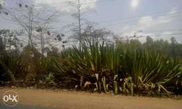Prime 2.6 acres in Karen along Langata Road.