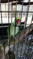 Bird with cage