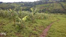1/4 Acre for sale in Tenwek. Very fertile.