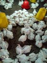 Broiler chicken ready for sale