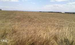 70 acres timau at 1.8m/acre