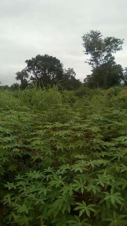 30plots of land located in Ugwuogo nike Enugu East Nigeria Enugu North - image 4