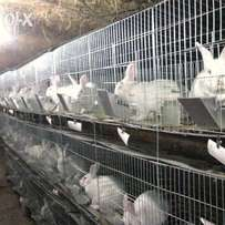 Rabbits cages at 550,000