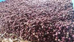 Red Dry Onion Harvested in March Type Neptune
