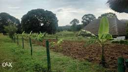 30 acres with chicken bandas and mango trees